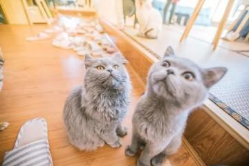 我们体验了猫咖发现并不挣钱